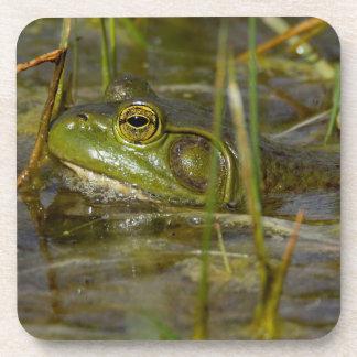 American Bullfrog in the Water Coasters