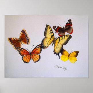 American Butterflies Poster