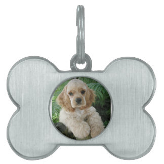 American Cocker Spaniel Dog And The Green Fern Pet Tags