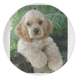 American Cocker Spaniel Dog And The Green Fern Plate