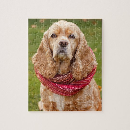 American Cocker Spaniel Outdoors On Autumn Day Jigsaw Puzzle