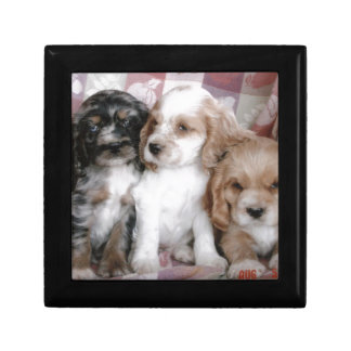 American Cocker Spaniel Puppies Gift Box