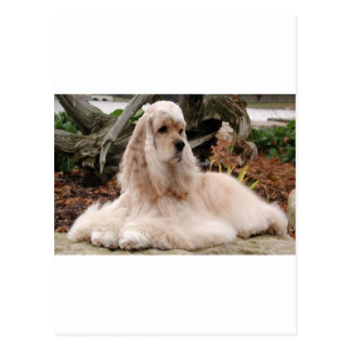 American Cocker Spaniel Series Postcard