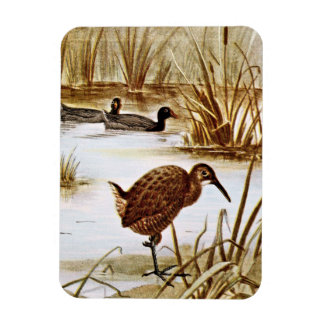 American Coot and Clapper Rail Rectangular Magnets