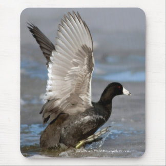 American Coot (Fulica americana) Mouse Pad