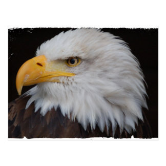 AMERICAN EAGLE - Jean Louis Glineur Photography Postcard