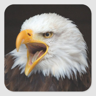 AMERICAN EAGLE - Photography Jean Louis Glineur Square Sticker