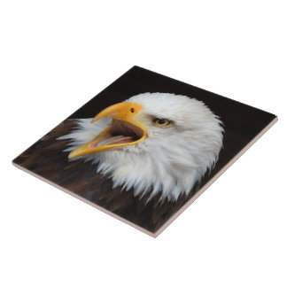 AMERICAN EAGLE - WEIS HEAD SEA-EAGLE BY JL Glineur Tile