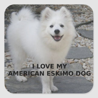 American_Eskimo_Dog_love w pic Square Sticker