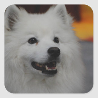 American Eskimo Dog Stickers