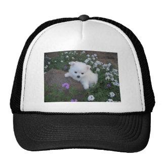 American Eskimo Puppy Dog Cap
