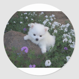 American Eskimo Puppy Dog Classic Round Sticker
