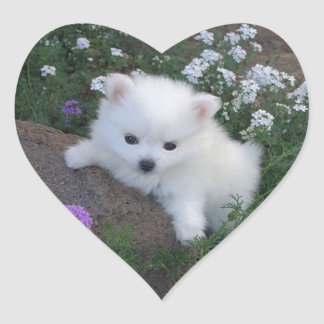 American Eskimo Puppy Dog Heart Sticker