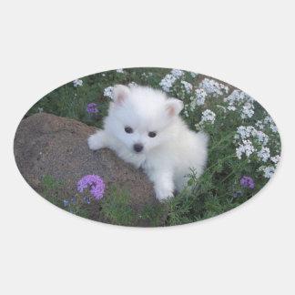 American Eskimo Puppy Dog Oval Sticker