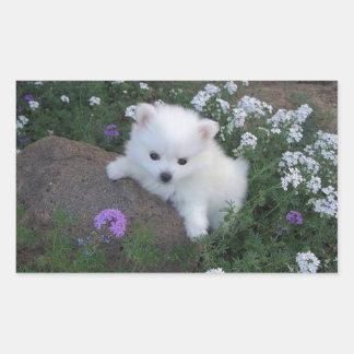 American Eskimo Puppy Dog Rectangular Sticker