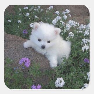 American Eskimo Puppy Dog Square Sticker