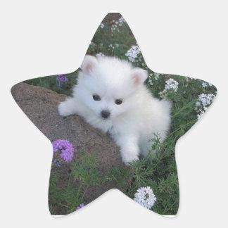 American Eskimo Puppy Dog Star Sticker