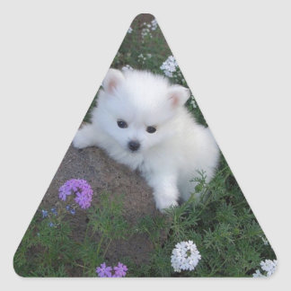American Eskimo Puppy Dog Triangle Sticker