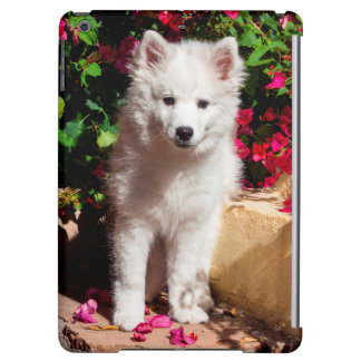 American Eskimo puppy sitting on garden stairs