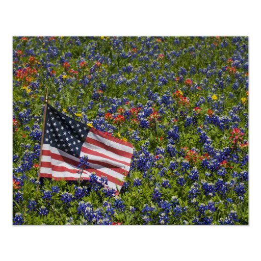 American Flag in field of Blue Bonnets, 2 Posters