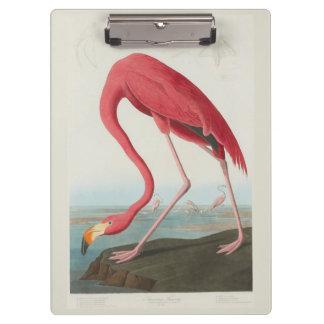 American Flamingo by John James Audubon 1838 Clipboard