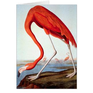 American Flamingo Card