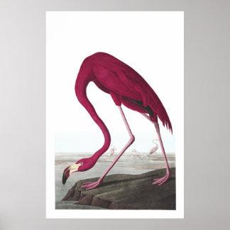 American Flamingo Illustration Poster
