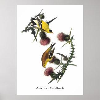 American Goldfinch, Audubon Poster