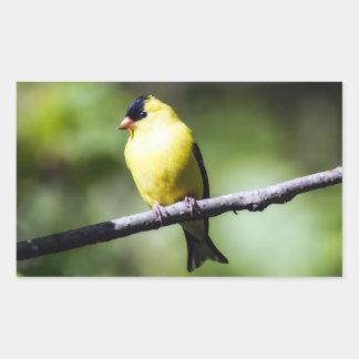American Goldfinch Bird Rectangle Sticker