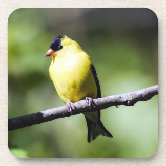 American Goldfinch Hard Plastic Drink Coaster
