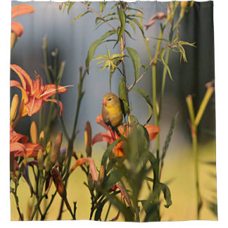 American goldfinch in the garden with day lilies shower curtain