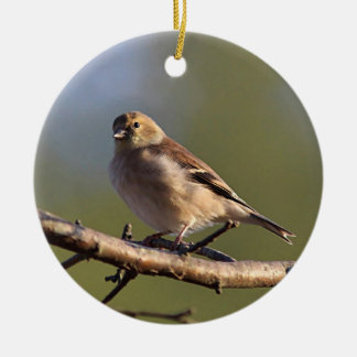 American goldfinch in winter plumage round ceramic decoration