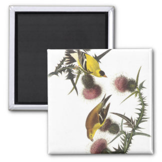 American Goldfinch Refrigerator Magnets
