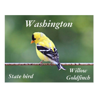 American goldfinch photo postcard