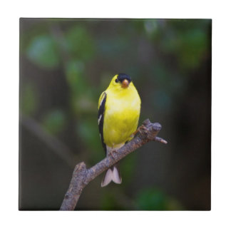 American Goldfinch tile