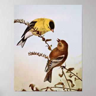 American Goldfinchs Bird Illustration Poster