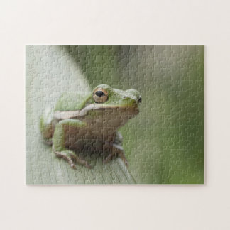 American Green Tree Frog (Hyla cinerea) Puzzle