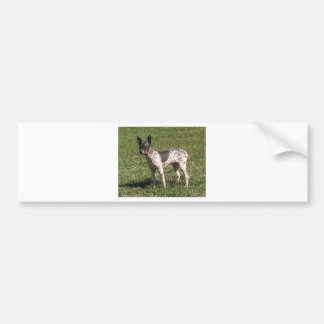 American Hairless Terrier Dog Bumper Sticker