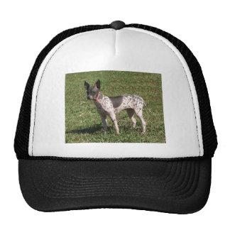 American Hairless Terrier Dog Cap