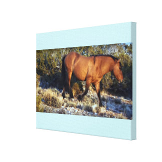 AMERICAN HORSE WILD MUSTANG CANVAS PRINT