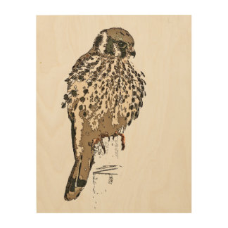 American Kestral Bird Wildlife Wood Canvas Art