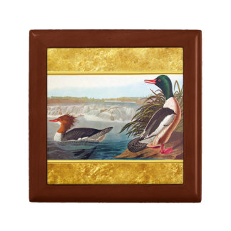 American mallard ducks in a river swimming gift box