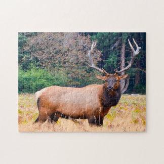 American Moose in California. Jigsaw Puzzle