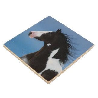 American paint horse wood coaster