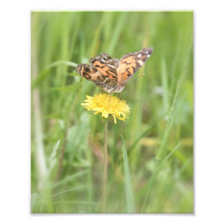 American Painted Lady Butterfly Photo Print