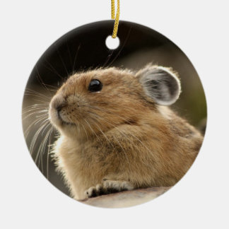 American Pika Ceramic Ornament