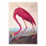 American Pink Flamingo Audubon Vintage Bookplate Photograph