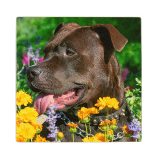 American Pit Bull in field of flowers Maple Wood Coaster