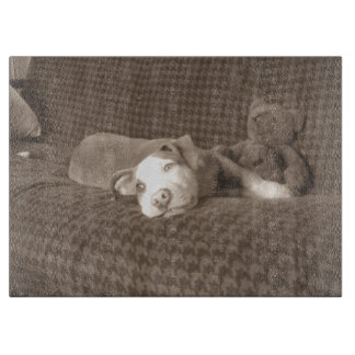 American_Pit_Bull_Terrier_and_teddy_bear_on_couch. Cutting Board