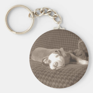 American_Pit_Bull_Terrier_and_teddy_bear_on_couch. Key Ring
